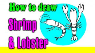 How to draw Shrimp & Lobster for kids