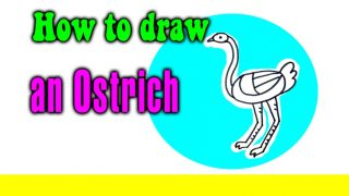 How to draw an Ostrich for kids