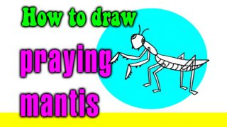 How to draw a Praying Mantis kids