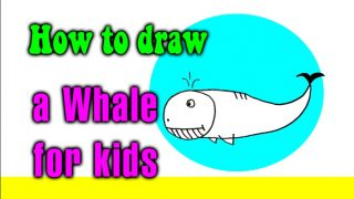How to draw a Whale for kids