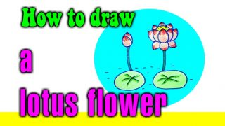 How to draw a lotus flower step by step