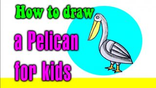 How to draw a Pelican for kids