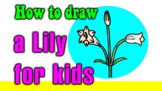 How to draw a Lily for kids