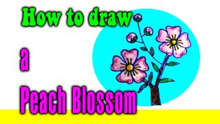 How to draw a Peach Blossom for kids