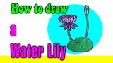 How to draw a Water lily for kids