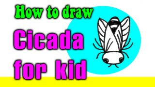 How to draw a Cicada for kid